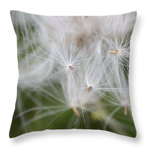 Thistle Seeds Throw Pillow featuring the photograph Thistle Seeds by Bob Christopher