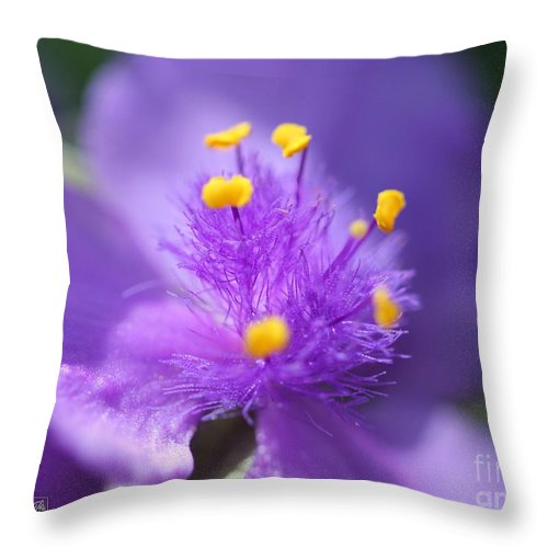 Tradescantia Throw Pillow featuring the photograph Tradescantia Named Andersonia Mauve by J McCombie