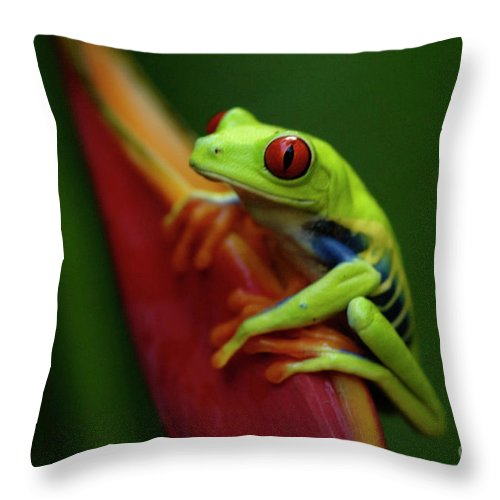 Frog Throw Pillow featuring the photograph Tree Frog 19 by Bob Christopher