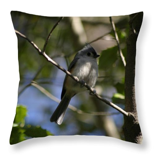 Birds Throw Pillow featuring the photograph Tufted Titmouse 2 by Living Color Photography Lorraine Lynch
