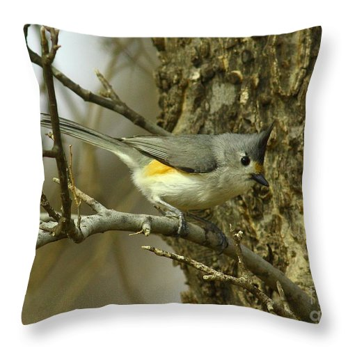 Animal Throw Pillow featuring the photograph Tufted Titmouse by Robert Frederick