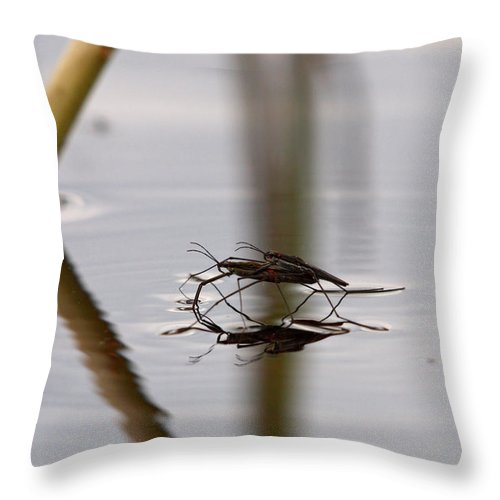 Vesimittari Throw Pillow featuring the photograph Water Skaters by Jouko Lehto