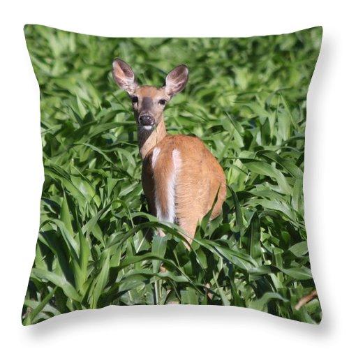 Deer Throw Pillow featuring the photograph Whitetail Deer by Lori Tordsen