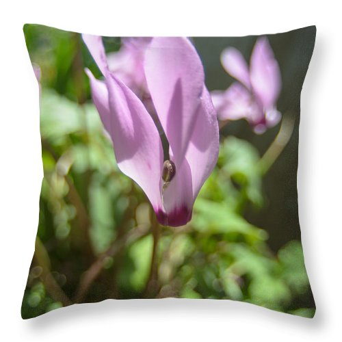 Alone Throw Pillow featuring the photograph Wild Cyclamen by Michael Goyberg