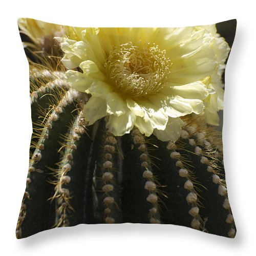 Cactus Throw Pillow featuring the photograph Yellow Cactus Flower by Jim And Emily Bush