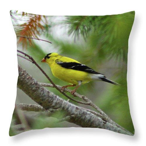 Bird Throw Pillow featuring the photograph Yellow by Rick Monyahan