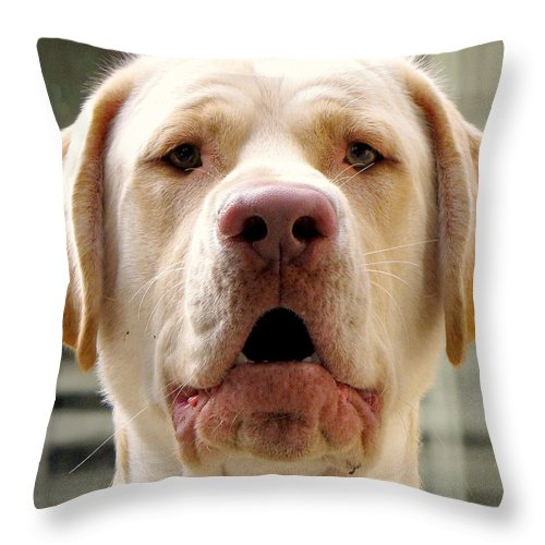 Dog Throw Pillow featuring the photograph Yodelling Luke by Lori Pessin Lafargue