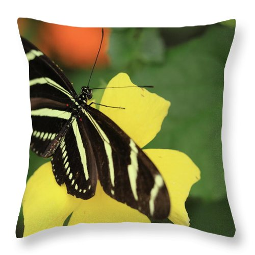 Flowers Throw Pillow featuring the photograph Zebra Longwing by Rick Berk