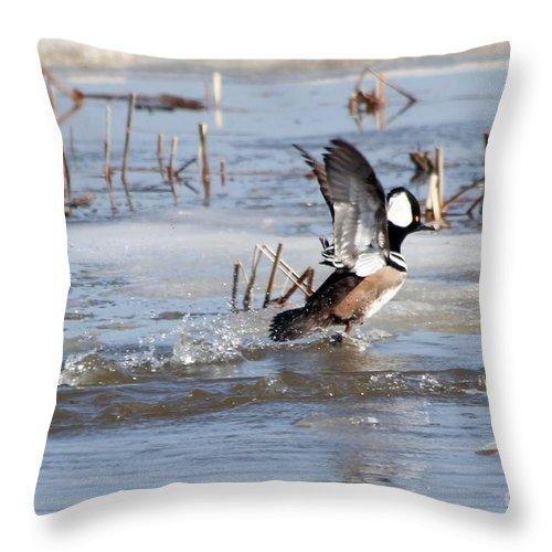 Hodded Throw Pillow featuring the photograph Hooded Merganser by Lori Tordsen