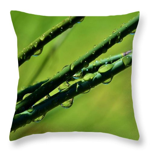 Bamboo Grass; Rain; Drops; Garden; Macro; Nature; Wet; Water; Green; Brown; Plant; Background; Spring; Reflection; Droplets; Throw Pillow featuring the photograph Raindrops On Bamboo Grass by Werner Lehmann