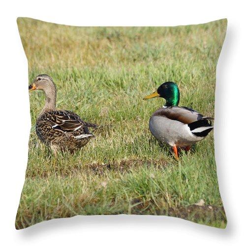 Mallard Throw Pillow featuring the photograph Mallard Ducks by Lori Tordsen