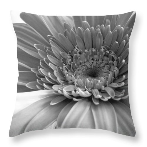 Gerbera Photographs Throw Pillow featuring the photograph 1614-002 by Kimberlie Gerner