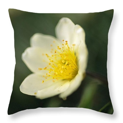 North America Throw Pillow featuring the photograph A Close View Of A Wildflower In Yoho by Michael Melford