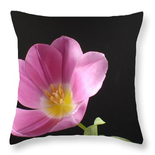 Photography Throw Pillow featuring the photograph A Tulip Tulipa Greigii by Joel Sartore