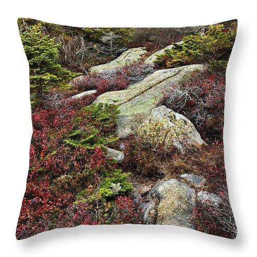 Acadia Throw Pillow featuring the photograph Acadia National Park by John Greim