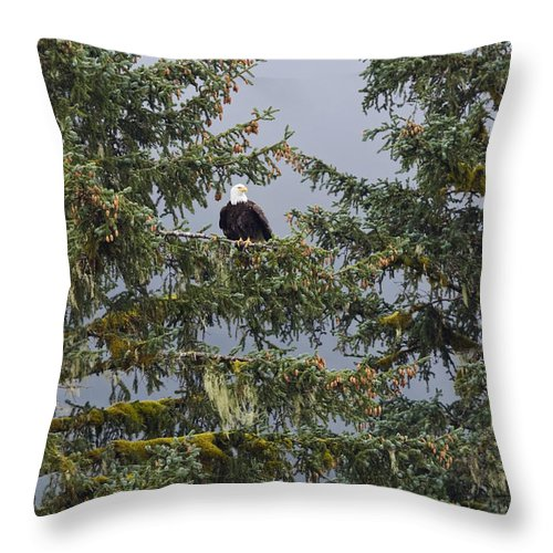 Mp Throw Pillow featuring the photograph Bald Eagle Haliaeetus Leucocephalus by Konrad Wothe