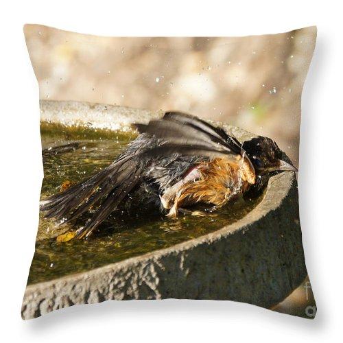 Robin Throw Pillow featuring the photograph Bird Bath Fun Time by Lori Tordsen