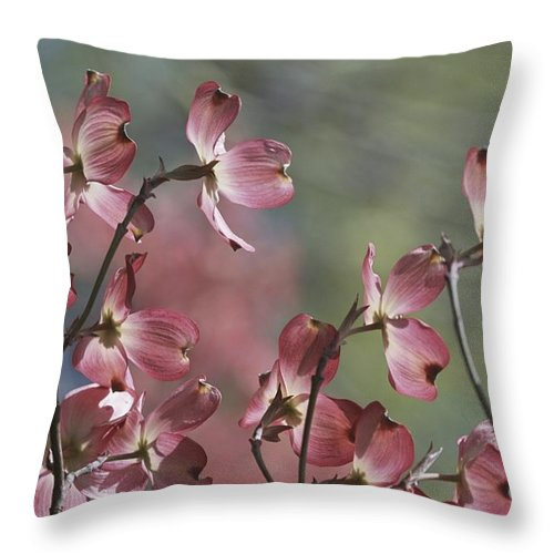 Scenes And Views Throw Pillow featuring the photograph Close View Of Pink Dogwood Blossoms by Darlyne A. Murawski