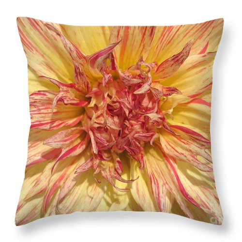 Dahlia Throw Pillow featuring the photograph Dahlia Named Misty Explosion by J McCombie