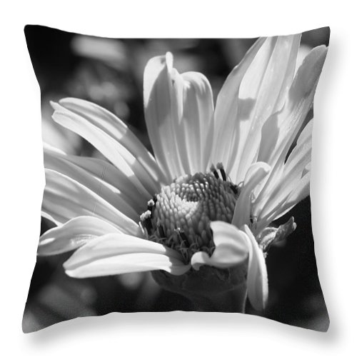 Flora Throw Pillow featuring the photograph Daisy In Black And White by Bruce Bley
