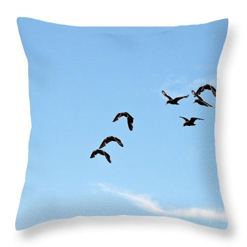 Oystercatcher Throw Pillow featuring the photograph Flock Of Flying Oystercatchers by Derek Holzapfel