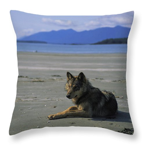 Pacific Ocean Throw Pillow featuring the photograph Gray Wolf On Beach by Joel Sartore
