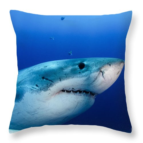 Carcharodon Carcharias Throw Pillow featuring the photograph Great White Shark, Guadalupe Island by Todd Winner