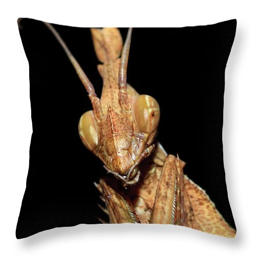 Animals Throw Pillow featuring the photograph Indian Rose Mantis by Joerg Lingnau