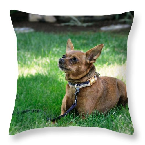 Pets Throw Pillow featuring the photograph Madox by Masha Batkova