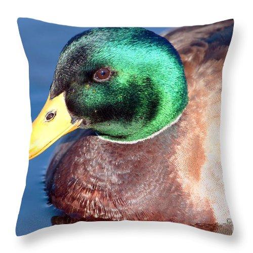 Duck Throw Pillow featuring the photograph Mallard Drake Portrait by Regina Geoghan