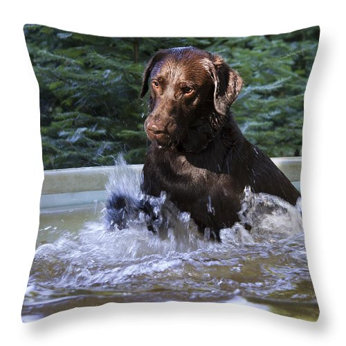 Jean Noren Throw Pillow featuring the photograph Nute by Jean Noren