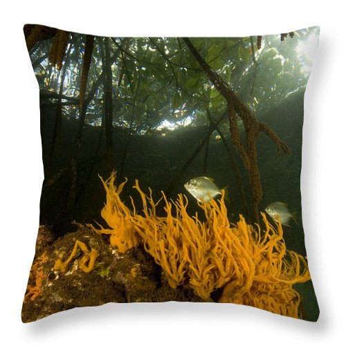 Underwater Throw Pillow featuring the photograph Orange Sponges Grow by Tim Laman