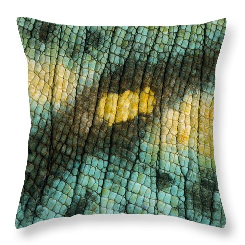 Mp Throw Pillow featuring the photograph Parsons Chameleon Skin by Ingo Arndt