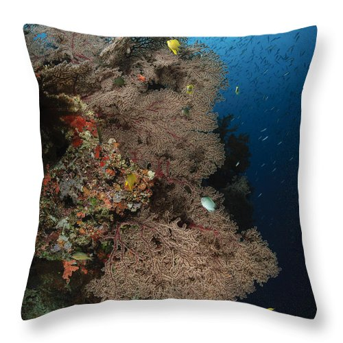 Sea Life Throw Pillow featuring the photograph Sea Fans, Fiji by Todd Winner