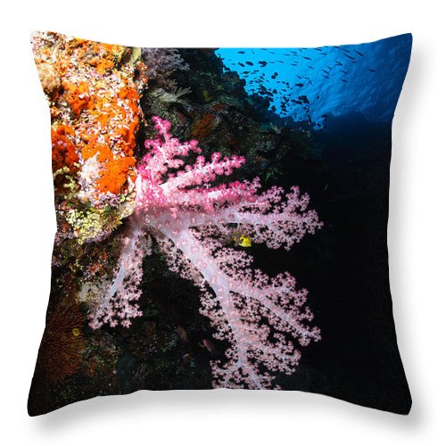 Fish Throw Pillow featuring the photograph Soft Coral Seascape, Fiji by Todd Winner