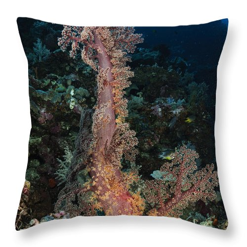 Ocean Throw Pillow featuring the photograph Soft Coral Seascape, Indonesia by Todd Winner
