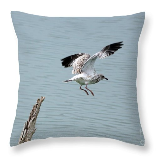 Seagull Throw Pillow featuring the photograph Take Off by Lori Tordsen