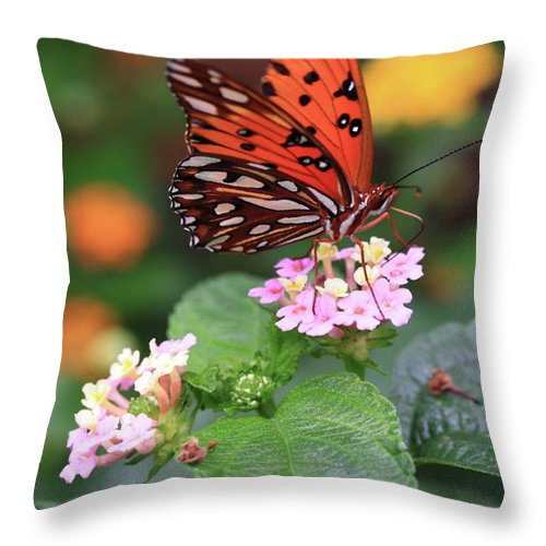 Butterfly Throw Pillow featuring the photograph Untitled by Rick Berk