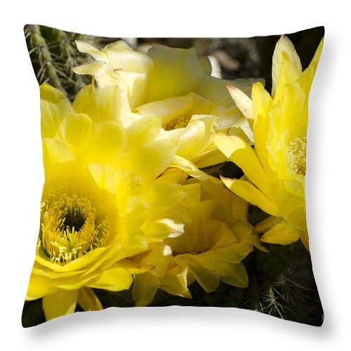 Cactus Throw Pillow featuring the photograph Yellow Cactus Flowers by Jim And Emily Bush