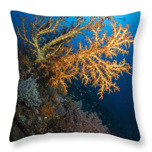 Raja Ampat Throw Pillow featuring the photograph Yellow Sea Fan In Raja Ampat, Indonesia by Todd Winner