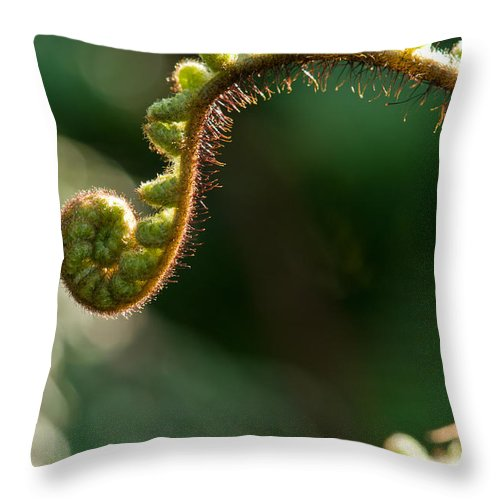 Beginnings Throw Pillow featuring the photograph Young Fern In The Morning Sun by U Schade
