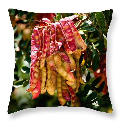 California Throw Pillow featuring the digital art Old Town San Diego by Carol Ailles