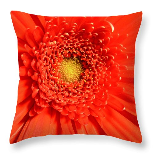 Gerber Photographs Throw Pillow featuring the photograph 2513 by Kimberlie Gerner