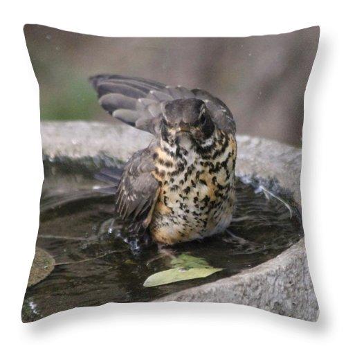 Robin Throw Pillow featuring the photograph Bath Time by Lori Tordsen