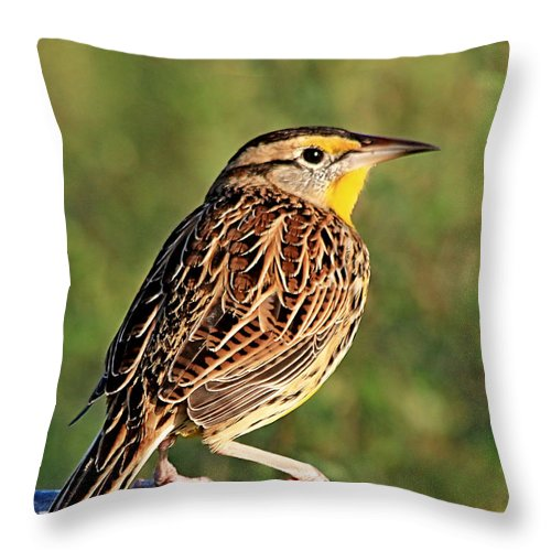 Agriculture Throw Pillow featuring the photograph Eastern Meadowlark by Ira Runyan