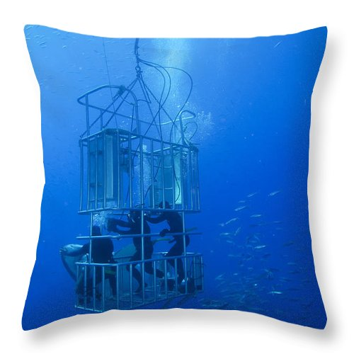 Carcharodon Carcharias Throw Pillow featuring the photograph Great White Shark And Divers, Guadalupe by Todd Winner