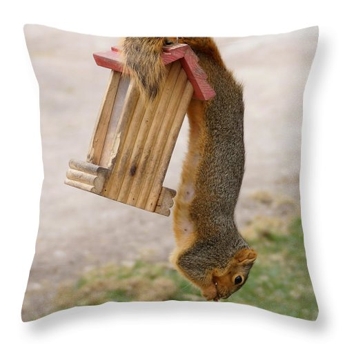 Squirrel Throw Pillow featuring the photograph Hanging Around by Lori Tordsen