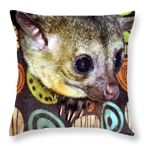 Kinkajou Throw Pillow featuring the photograph Nosey by Art Dingo
