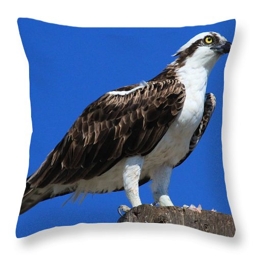 Osprey Prints Throw Pillow featuring the photograph Osprey by Paul Marto