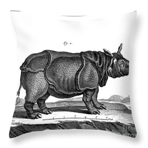 18th Century Throw Pillow featuring the photograph Rhinoceros by Granger
